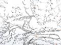 3 views rust spots, detail